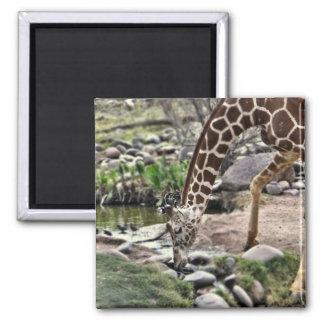 gracious giraffe magnet