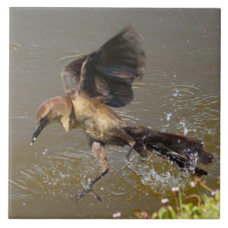 Grackle Bird flying walking on water Tile