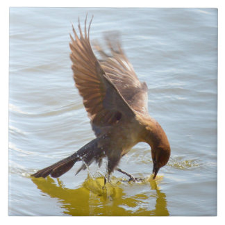 Grackle Bird landing water Ceramic Tile