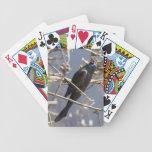 Grackle común barajas de cartas