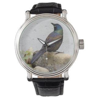 Grackle común reloj de mano