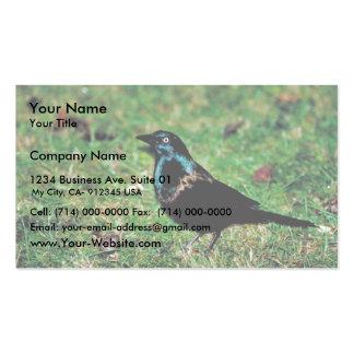Grackle común tarjetas de visita