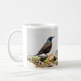 Grackle común taza clásica