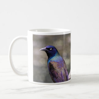 Grackle común taza de café