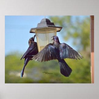 Grackles crows birds Bird feeder Poster