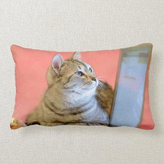 Grado lindo del gato una almohada de tiro del