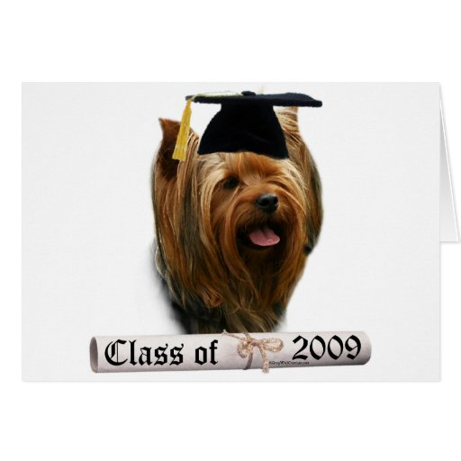 Graduado 09 de Yorkshire Terrier Felicitaciones