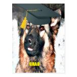 Graduado del pastor alemán de la postal