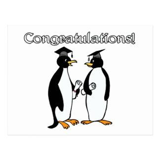 Graduados del pingüino tarjetas postales