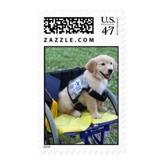 Graduation Abby stamp