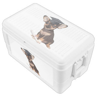 Graduation Chihuahua Chest Cooler