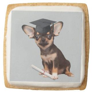 Graduation Chihuahua dog Square Shortbread Cookie