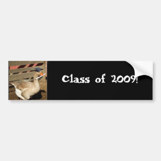 Graduation goose car bumper sticker