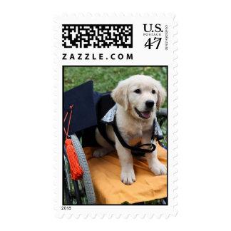 Graduation Penny Postage
