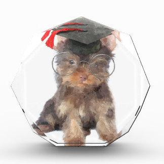 Graduation Yorkshire Terrier Award