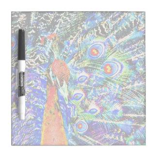 gráfico artístico anaranjado del pavo real y de la pizarra blanca
