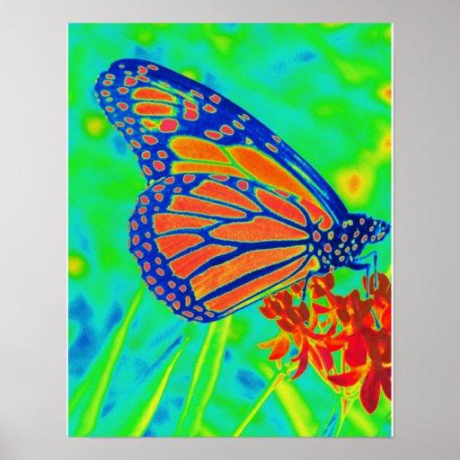 Gráfico bonito colorized mariposa de la fotografía poster