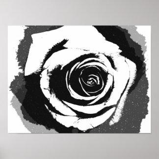 Gráfico color de rosa blanco y negro póster