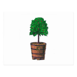 Gráfico del árbol en cubo de madera del barril tarjetas postales