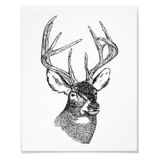 Gráfico del arte de los ciervos del vintage arte fotográfico