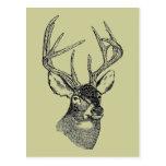 Gráfico del arte de los ciervos del vintage tarjeta postal