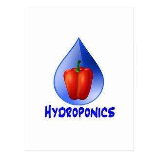 Gráfico del hidrocultivo, pimienta hidropónica y postales