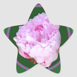 Gráfico floral de la foto de la flor color de rosa pegatina en forma de estrella