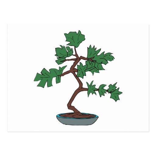 Gráfico joven vertical de los bonsais tarjetas postales