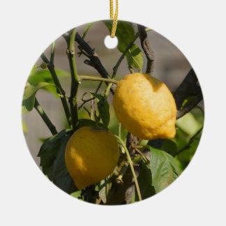 Gráficos españoles del limón ornato