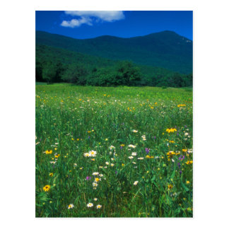 Grafton Notch meadow Postcards