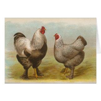Graham - Dark Brahma Chickens Card