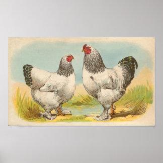 Graham - Light Brahma Chickens Portfolio Poster