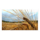 Grain Emporium Double-Sided Standard Business Cards (Pack Of 100)