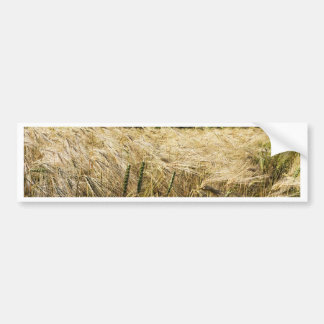 Grain field with trees and blue sky bumper sticker