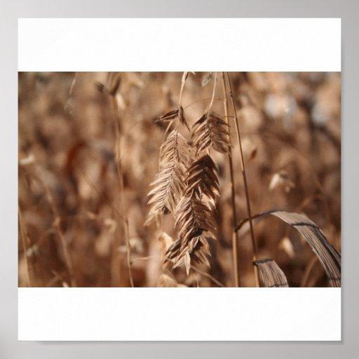 Grain Print