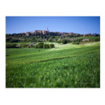 grainfield defocused con en el pienza, Toscana, Postal