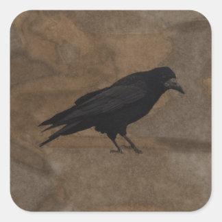 Grajo negro Corvid británico y fondo rústico Pegatina Cuadrada
