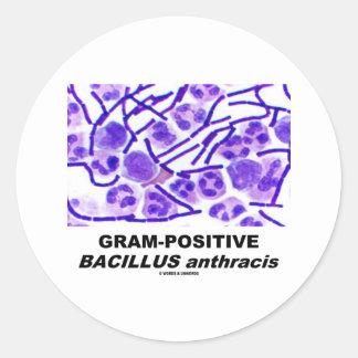 Gram-Positive Bacillus anthracis (Bacteria) Classic Round Sticker