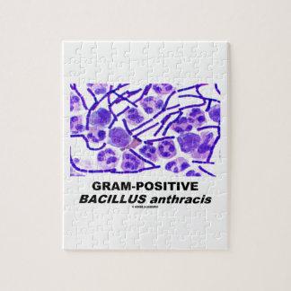 Gram-Positive Bacillus anthracis (Bacteria) Jigsaw Puzzle