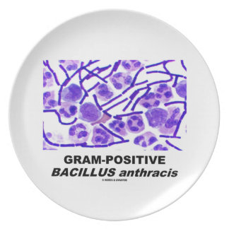 Gram-Positive Bacillus anthracis (Bacteria) Melamine Plate