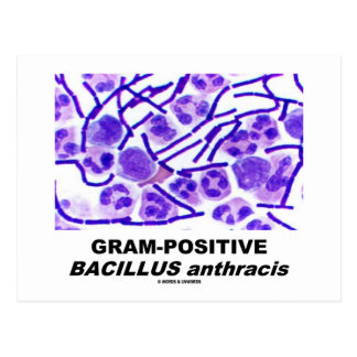 Gram-Positive Bacillus anthracis (Bacteria) Postcard