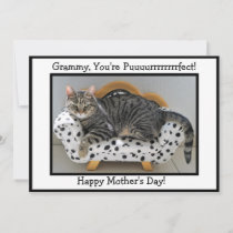 Grammy, You're Puurrfect! Tiger Cat Mother's Day Holiday Card