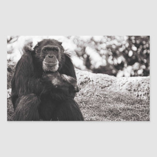 Grampa Monkey Rectangular Sticker