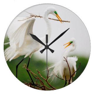 Gran actividad de la cría del Egret (Ardea Alba) Relojes