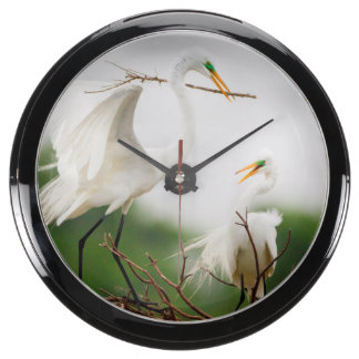 Gran actividad de la cría del Egret (Ardea Alba) Relojes Acuario