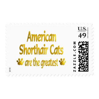 Gran americano Shorthair Sellos