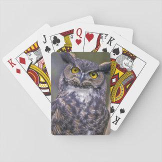 Gran búho de cuernos cartas de juego