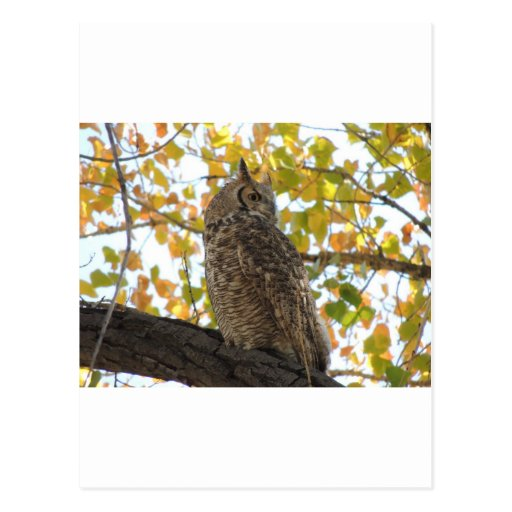 Gran búho de cuernos en un árbol tarjeta postal