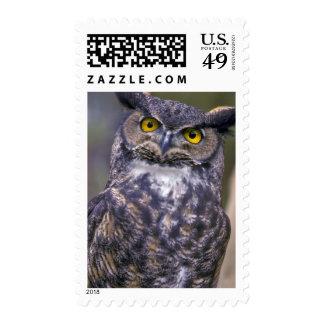Gran búho de cuernos timbres postales