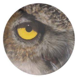 gran búho de cuernos, varia de Stix, parque zoológ Platos
